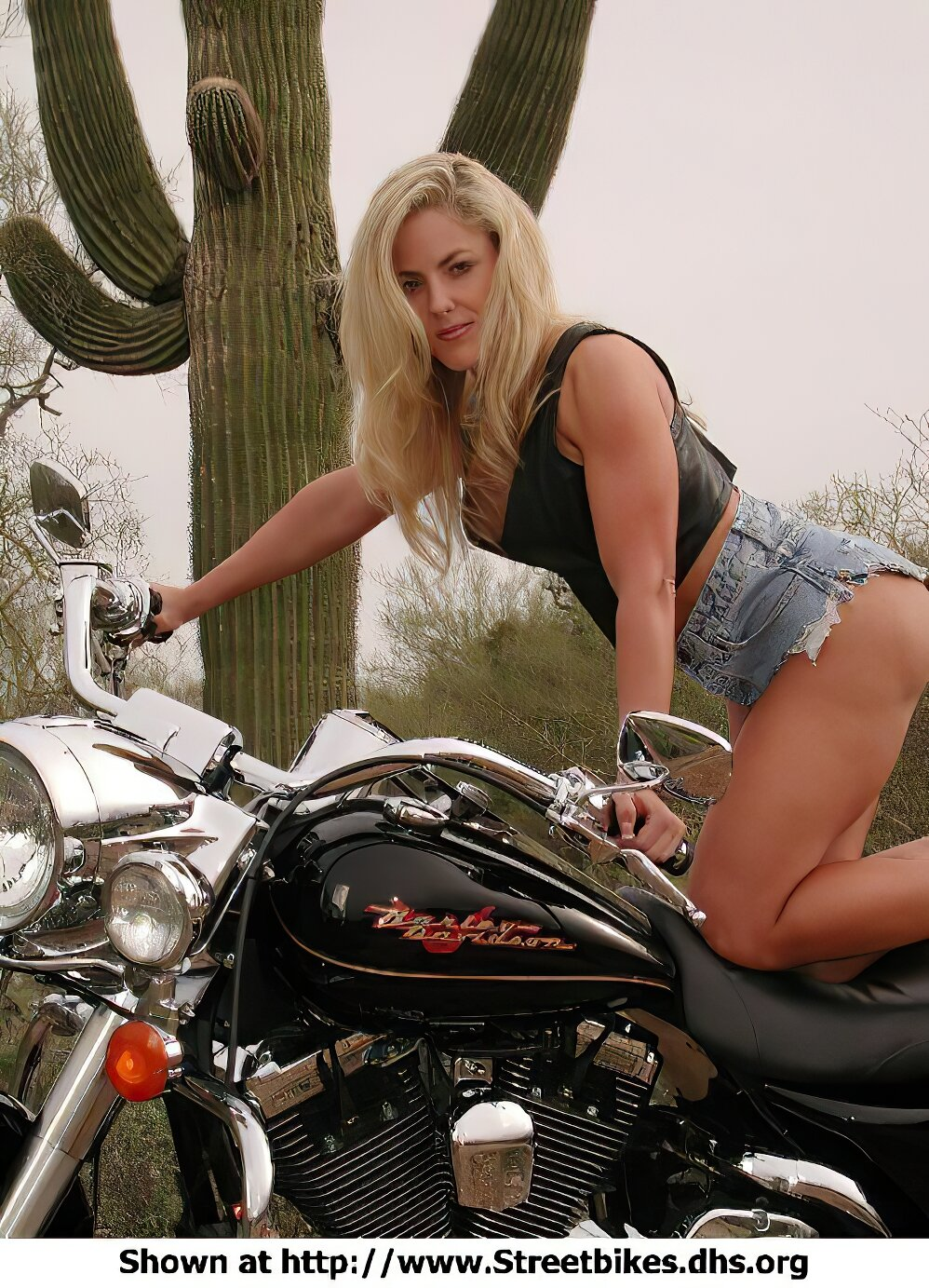 Harley-Davidson Unknown (HD) - ID: 1412